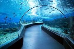 Gdynia's aquarium